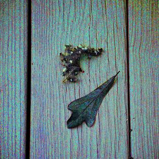 Oak Leaf and Friends