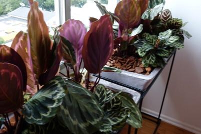 Plantscaping_Jardineiras de Papel de Reuso