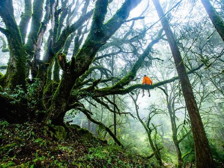 UM CONVITE À OBSERVAÇÃO. .. uma reflexão sobre ser Natureza