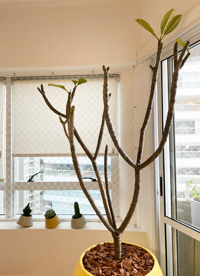 Projeto de Apartamento _ Árvore na Sala