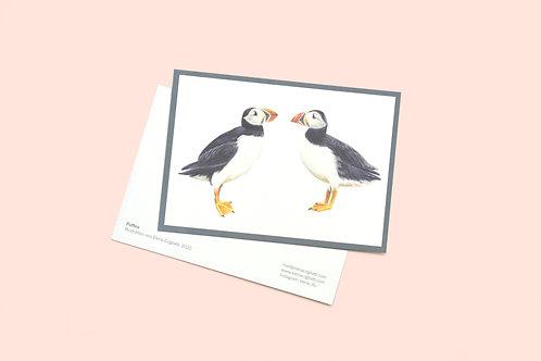 Puffin Postkarte