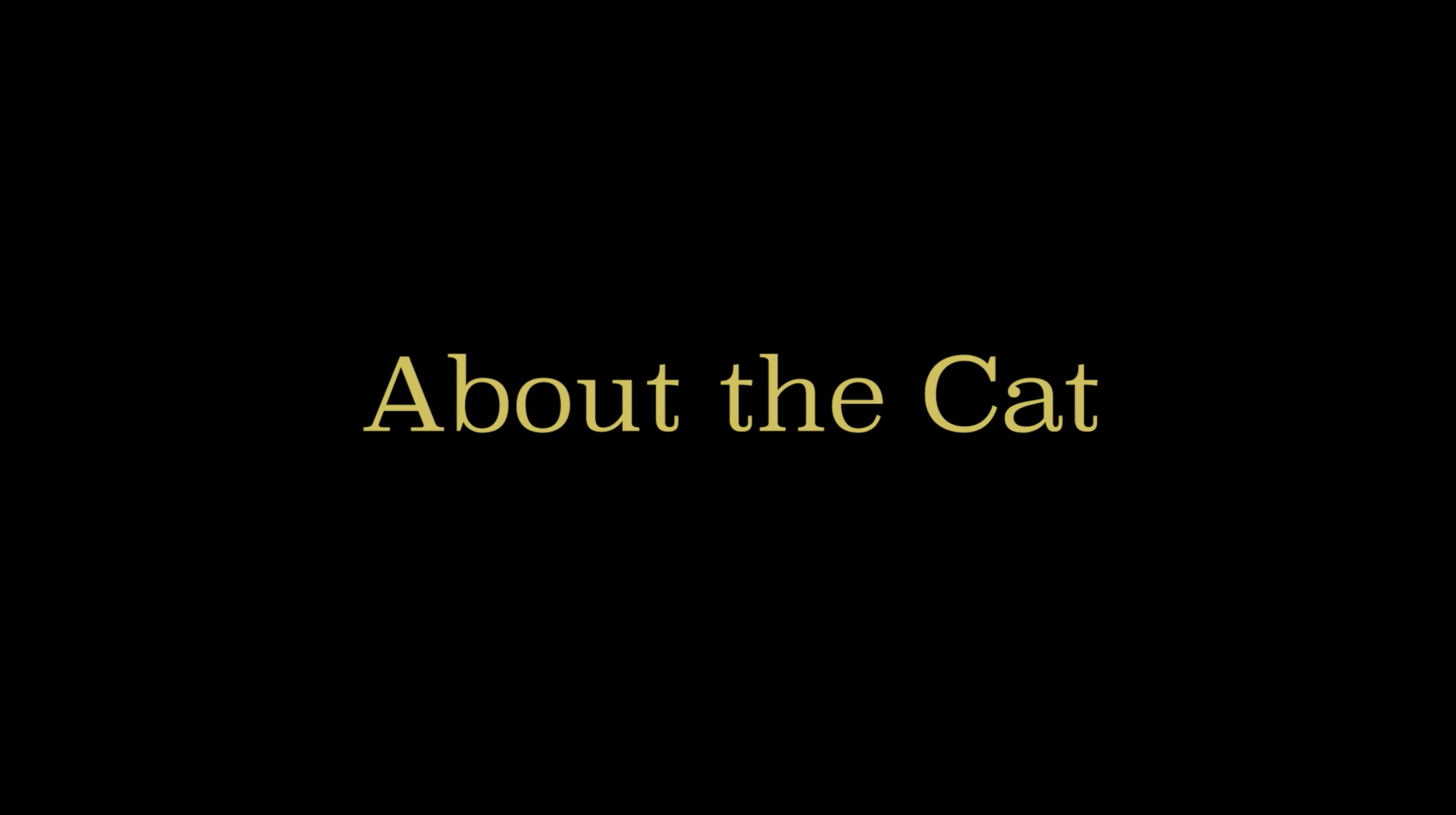 ABOUT THE CAT