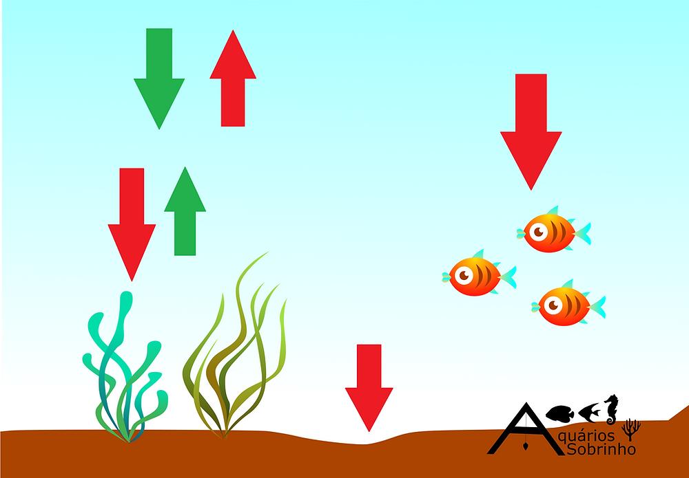 oxigênio aquário oxigenação