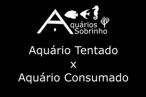 aquário tentado aquários sobrinho