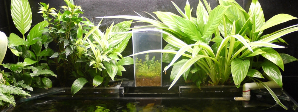 filtro de planta aquário