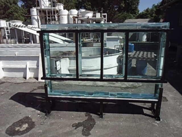 aquário filtro alga