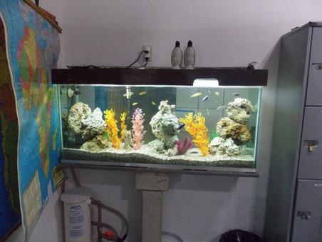 Aquário da escola CESB em Vila Velha