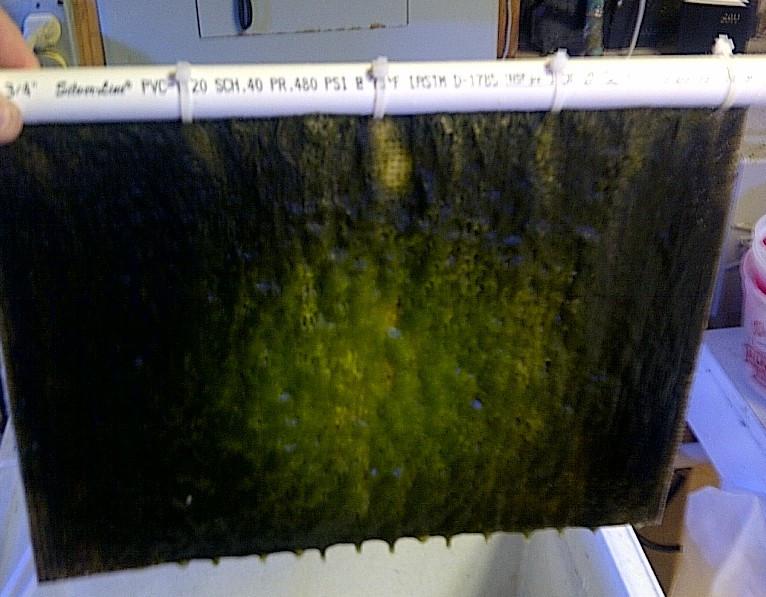 filtro de alga aquário ats