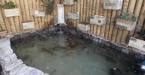 Reconstrução do lago da Aquários Sobrinho
