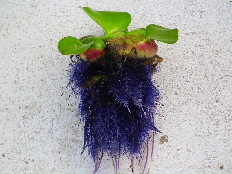 filtro planta aquário