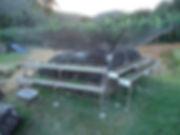 aquaponia aquáriossobrinh