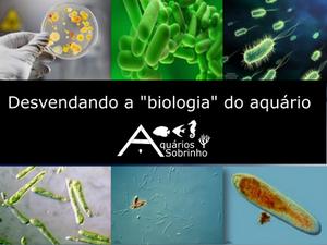 biologia aquário