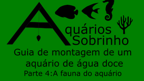 Guia de montagem de um aquário de água doce - Parte 4: A fauna do aquário