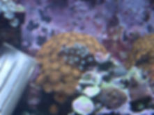 nosso aquário