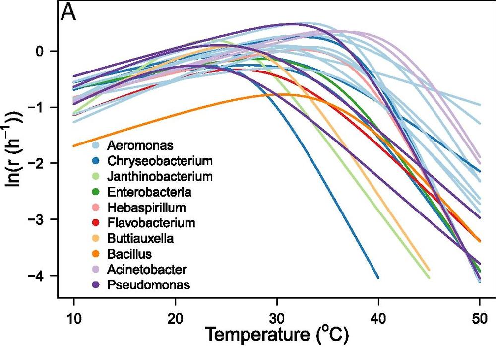 bactéria aquário temperatura