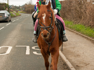 Horse riders saddle up for safety push