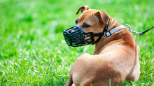 Dangerous Dogs: Breed Specific Legislation inquiry - read our publication