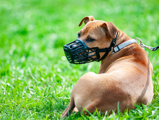 'Dangerous dogs legislation fails to protect the public' The Environment, Food and Rural Aff
