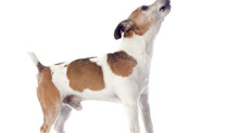 UK Dog Law: The Dog Laws Every UK Dog Owner Must Know, our comments to K9 Magazine