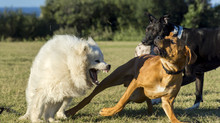 What is the legal position if your dog is attacked by another dog in a public place?