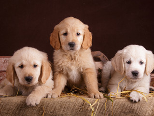 New regulations come into force today in England for pet sellers, breeders and boarders