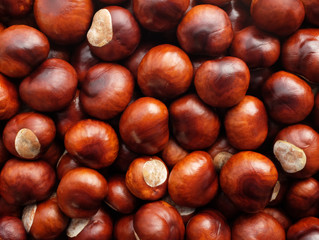 Pet owners warned that conkers are 'extremely dangerous' for dogs