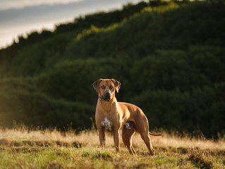 Dog owner fined for breaching control order