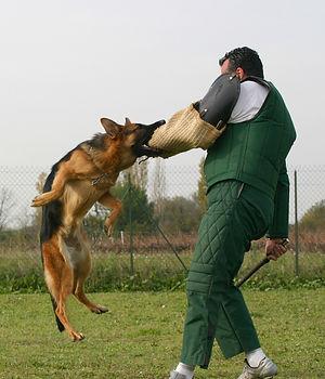 Claim for police dog bite injury