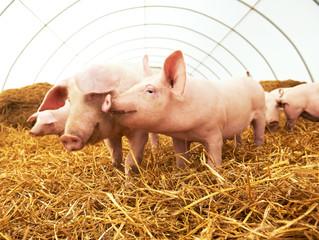 Launch of the Draft Animal Welfare Bill