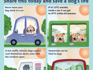 RSPCA- Dogs die in hot cars