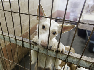 Animal cruelty could result in five-year jail sentence under new law