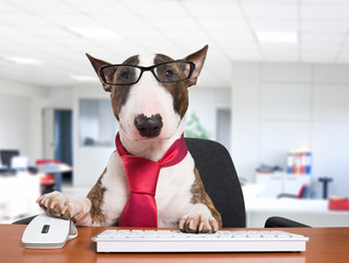 Bring your dog to work day 2018: 6 great benefits of taking your canine to work