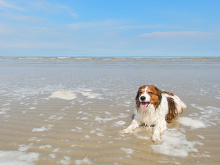 How to keep dogs cool in the heat - Shoreham Dogs Trust issue advice