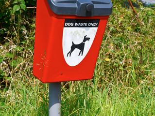 Dog owners in Craven could face fines for not carrying dog waste bags