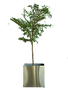 potted-plant-1029039_1920_edited.png