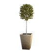 tree-5004279_1920.png