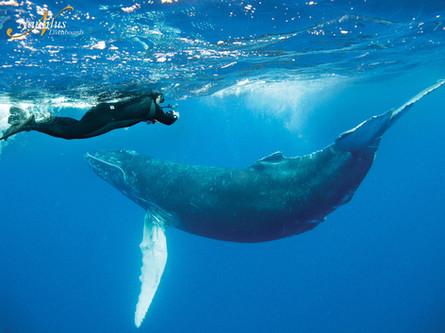 Socorro-humpback-whale-001-min.jpg