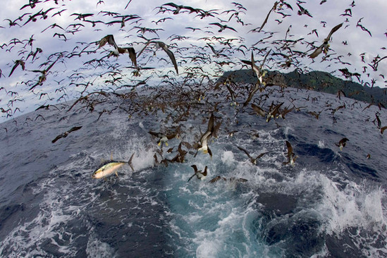 tuna-and-birds-shmulik-bloom.jpg