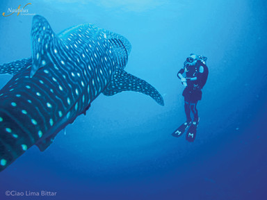 Socorro-whale-shark-002-min.jpg