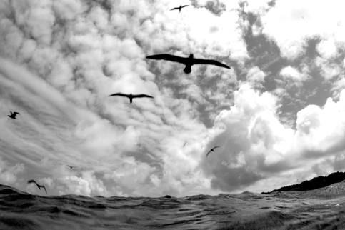 boobies-undersea-hunter.jpg