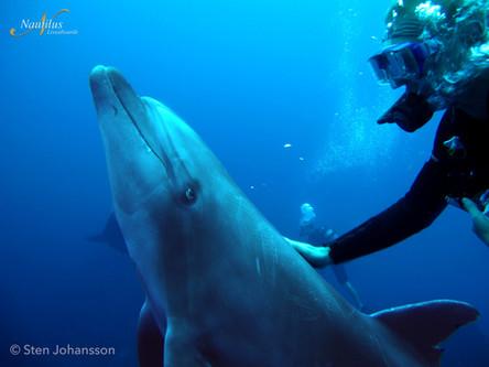 Socorro-dolphin-001-min.jpg