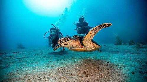 OPEN WATER DIVER PADI Prácticas y buceos de Certificación de buceo en Cancún