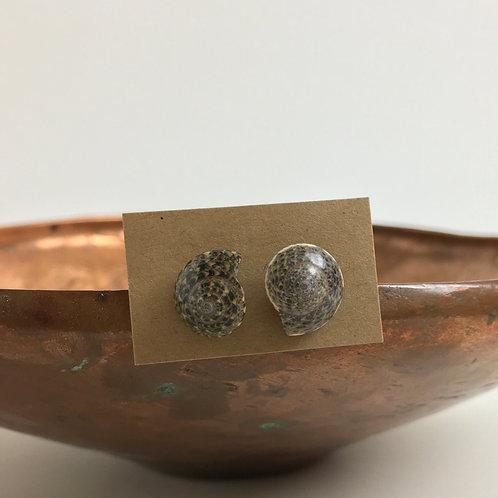 Seashell Stud Earrings
