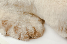 (detail) lamb fleece sourced for costumes