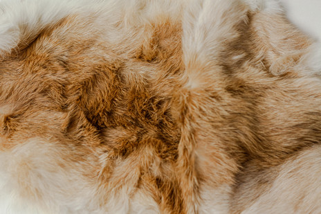 (detail) fur pelt sourced for costumes