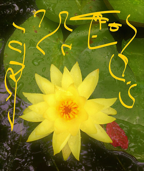 Water Liliy closeup (2)_LI.jpg
