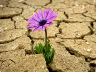 Liberta-te para que aconteça o TEU próprio Renascimento!!!