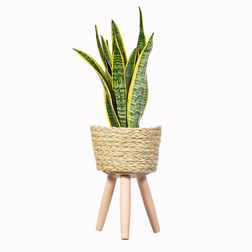Seagrass Planter With Legs