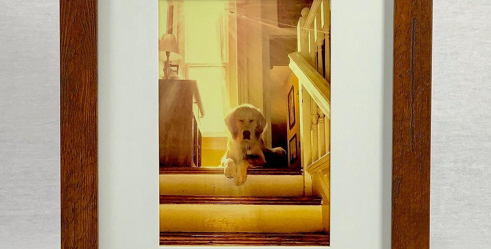 'Zen Dog' 8x10 Framed Print