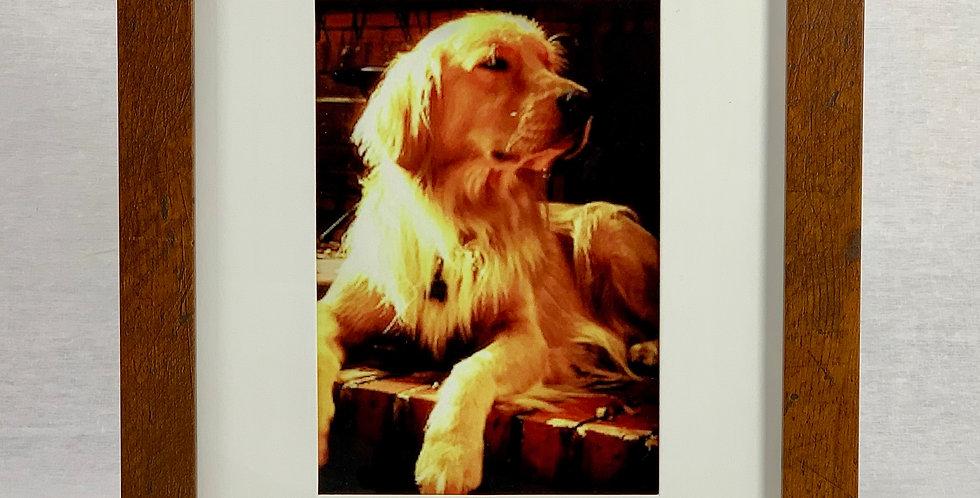 'The Golden Boy' 8x10 Framed Print